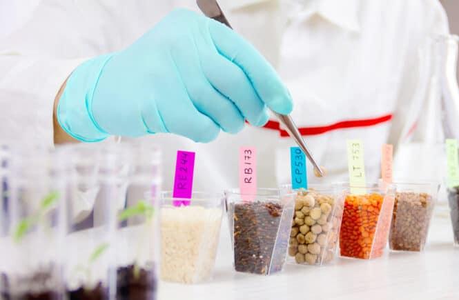 Nanotecnologia y alimentación