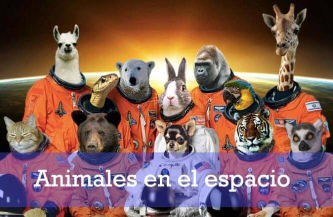 animales-que-viajaron-al-espacio